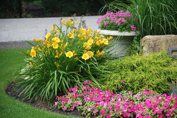 flower garden flowers landscaping